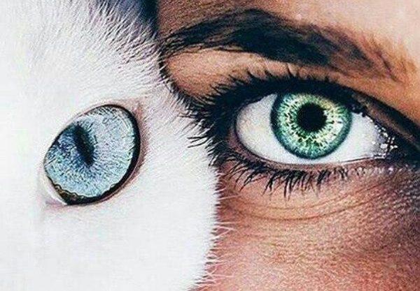 Ввиду общности строения глаз, уходовые манипуляция у людей и у кошек практически идентичны