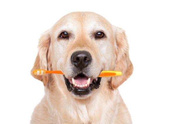 Для собаки можно купить зубную щётку, предназначенную для ребёнка