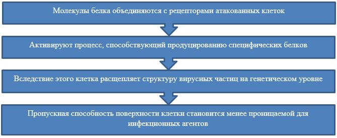 Принцип действия интерферонов