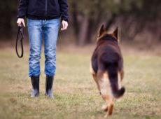"""""""Гулять!"""" - простая команда, которая нужна для того, чтобы научить собаку уходить гулять по команде, а затем – возвращаться"""