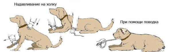 """Учим собаку команде """"Лежать!"""""""