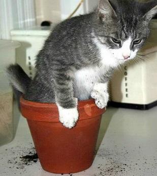 Правильный выбор туалета очень важен для кота