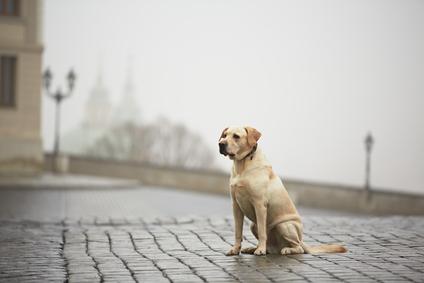 Как найти собаку по чипу
