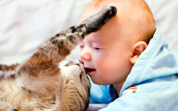 Кот играет с маленьким ребенком