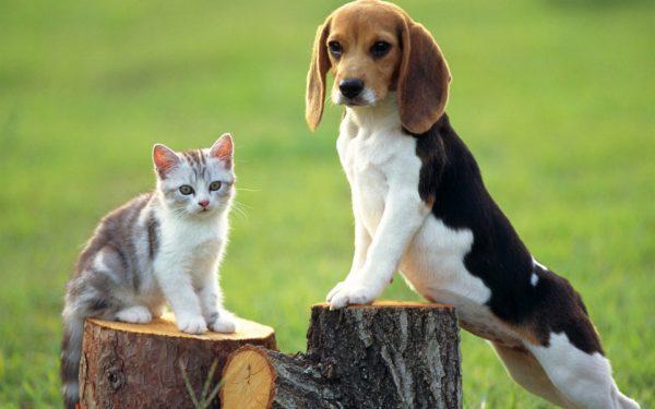 Эти упрямые собаки покорили множество человеческих сердец