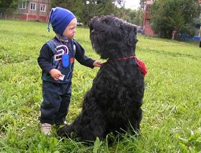 Собака будет играть с малышом с большим удовольствием