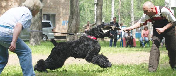 Использовать силу собственной собаки во вред – плохая и низкая идея