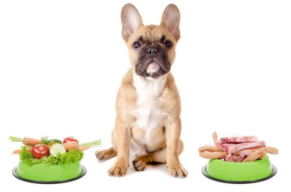 В организме собак не предусмотрена выработка ферментов для переваривания растительной клетчатки