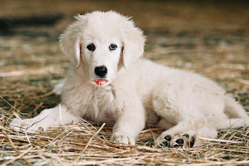 Воспитание щенка необходимо начинать с 3-4 месяцев