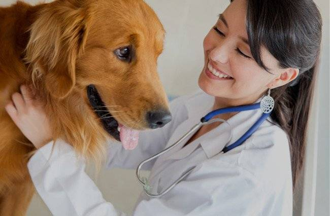 Во избежание рецидивов заболевания собаку следует периодически показывать ветеринару