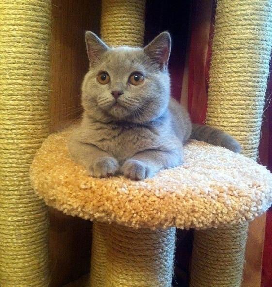 В доме, где есть котенок обязательно должна быть когтеточка