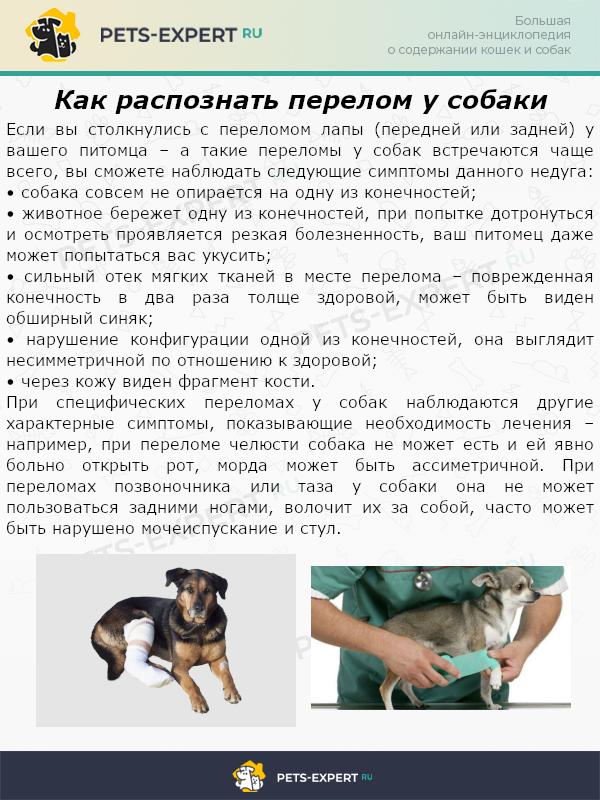 Как распознать перелом у собаки