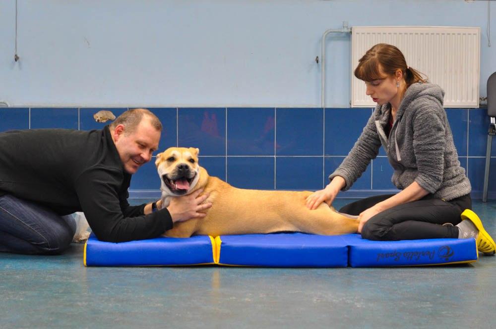 Лечебный массаж поможет восстановиться собаке после травм