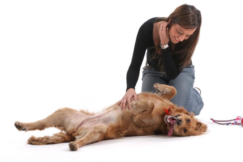 Массаж положительно влияет на состояние собаки