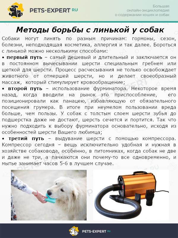 Методы борьбы с линькой у собак