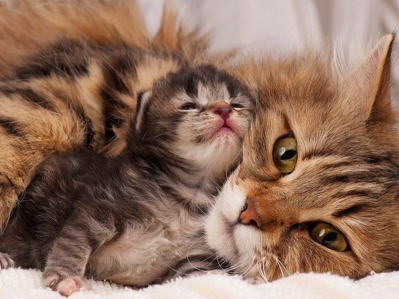 На время лечения необходимо изолировать котят от кошки