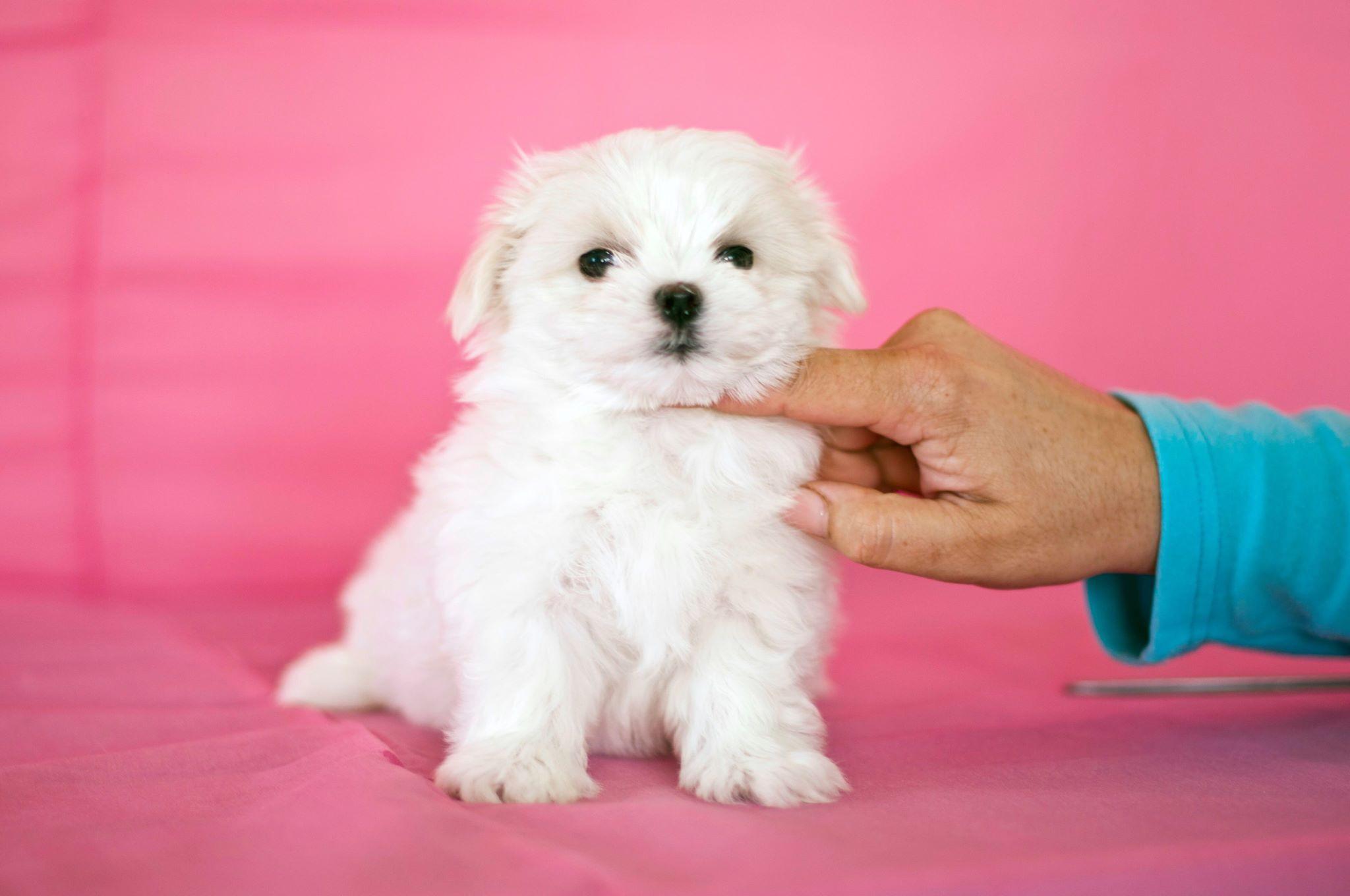 Нельзя игнорировать воспитание собаки