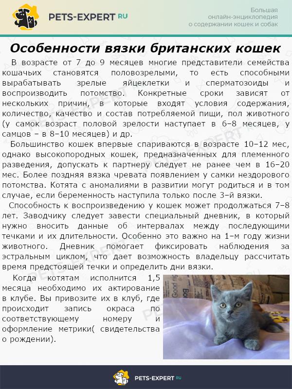 Особенности вязки британских кошек