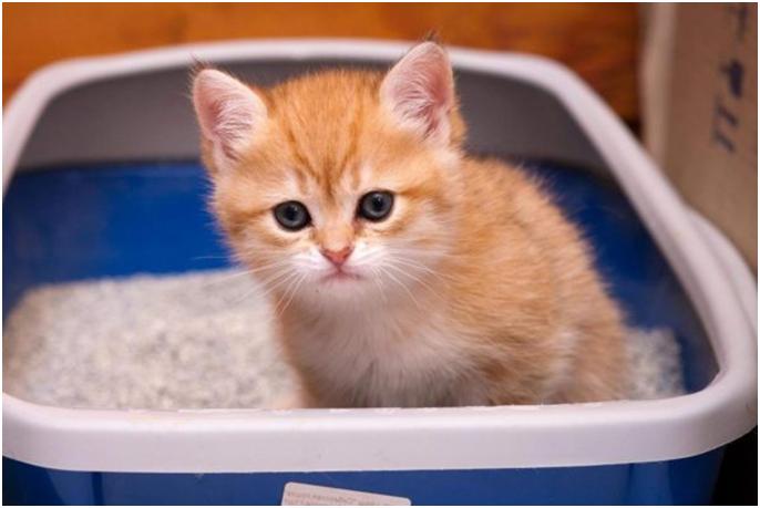 Первое время тщательно отслеживайте путь котенка до туалета, так вы сможете приучить его делать необходимые дела в нужном месте