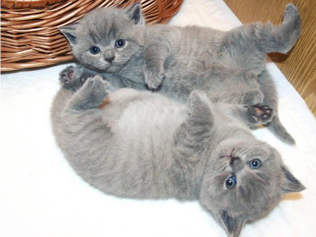 Первое купание котенка должно быть не ранее месячного возраста