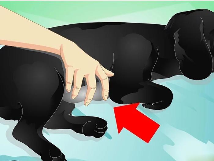 Погладьте собаке животик