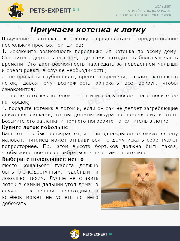 Приучаем котенка к лотку