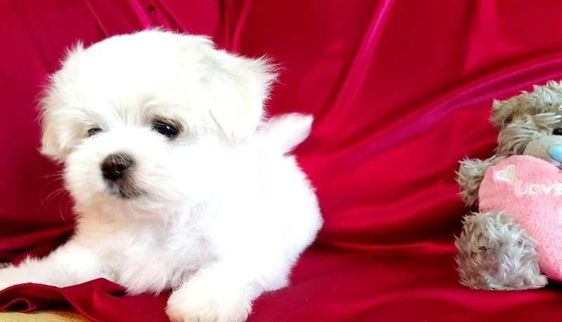 При покупке щенка необходимо проверить документы на собаку