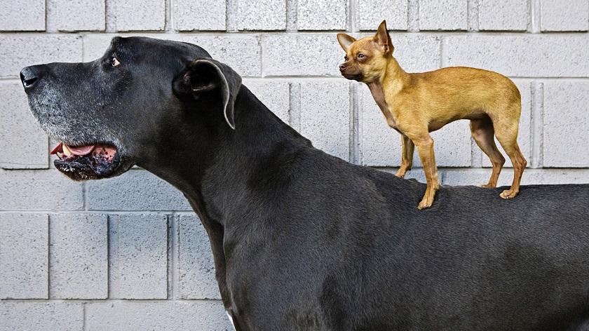 Разные породы собак склонны к разным типам параличей