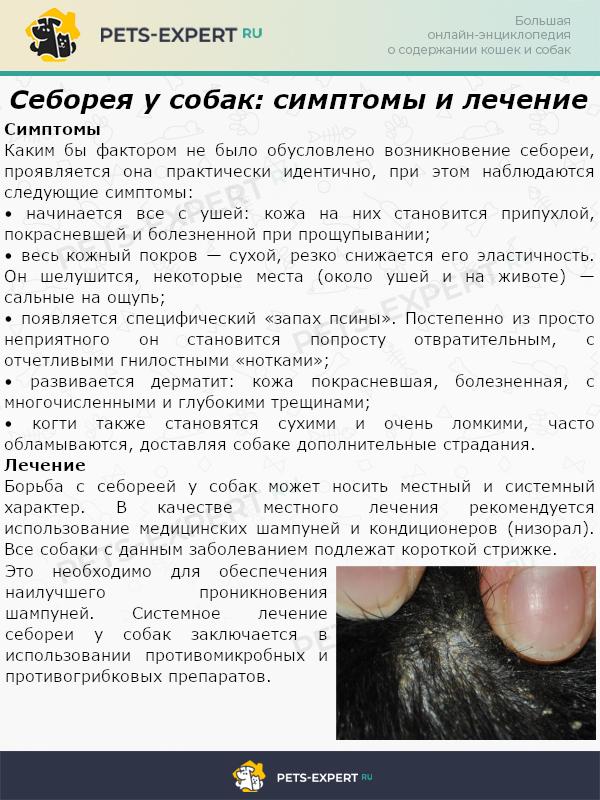 Себорея у собак симптомы и лечение