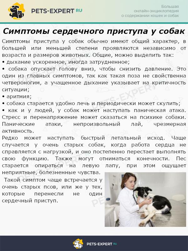 Симптомы сердечного приступа у собак