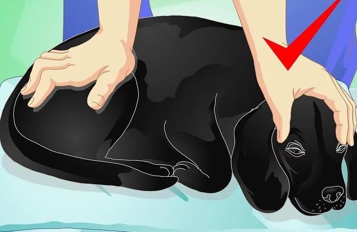 Собака довольна массажем