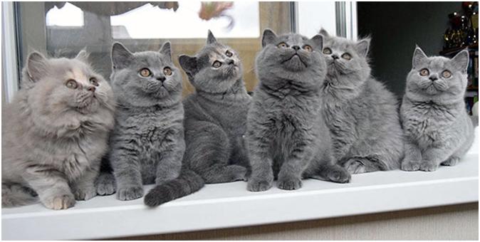 Цена котенка будет зависеть от некоторых факторов, например, от наличия документов и цели приобретения