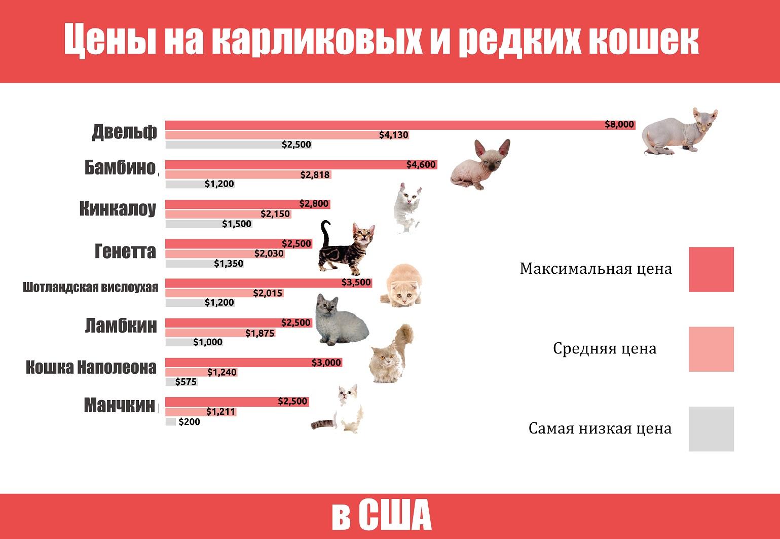 Цены на кошек в США
