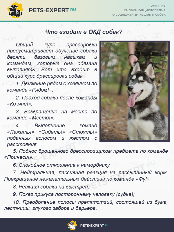 Что входит в ОКД собак?