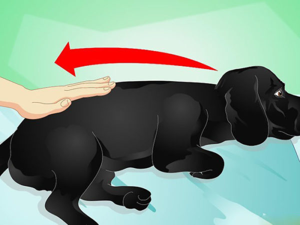Начинаем с поглаживания собаки