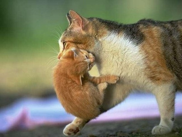 Находящихся в зубах самки котят нельзя трогать