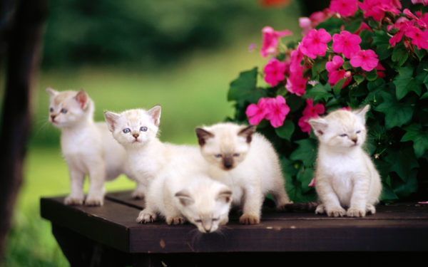 Некоторые кошатники считают, что имя и поведение кота взаимосвязаны
