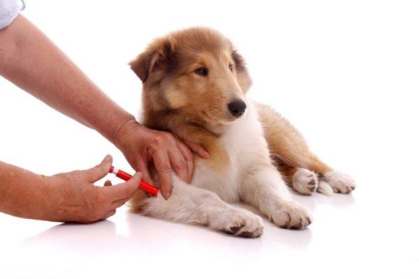 Прививки защищают собаку от смертельно-опасных инфекций