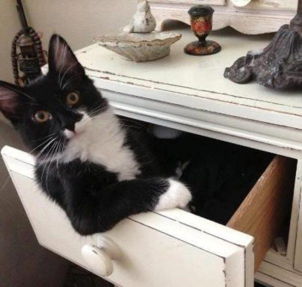 Кошки любят обустраивать жилище для малышей в тумбочках