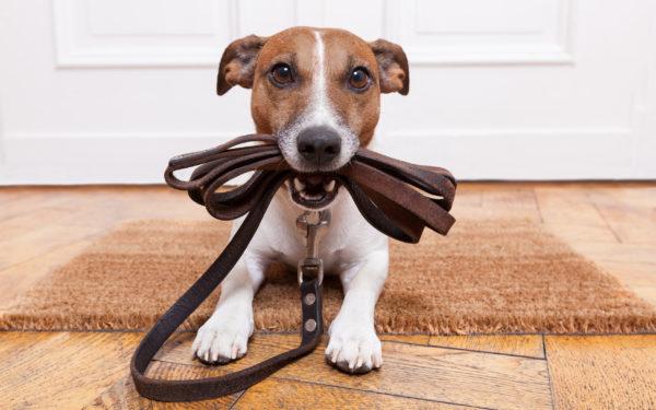 Уделив воспитанию щенка должное внимание, отпадет необходимость наказывать взрослую собаку