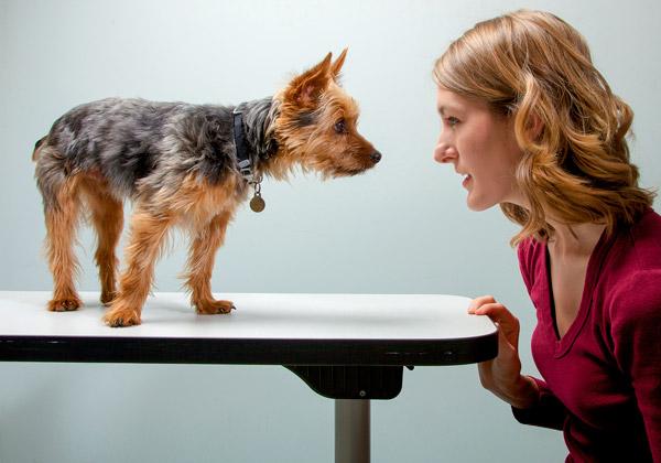 Показывать собаку предположительным владельцам следует только после скрупулезного опроса по телефону