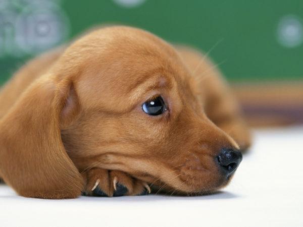Для подавления враждебного настроя не следует бить собаку