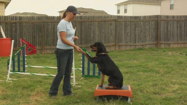 Собака является социальным животным, легко идущим на контакт с человеком