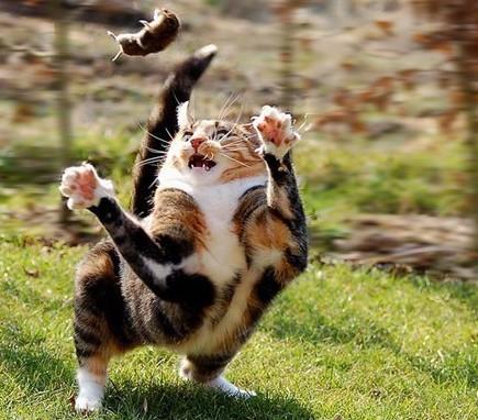 Желание преследовать убегающую мышь заложено в кошке на генетическом уровне