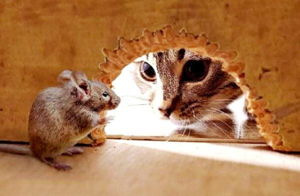 Поскольку благодаря пищевому инстинкту животное отправляется на поиски еды, он является одним из ведущих