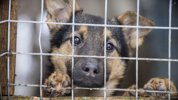 Бездомные псы попадают в приюты 2 раза в год