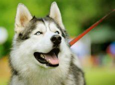 Собака должна получать удовольствие от дрессировочного процесса