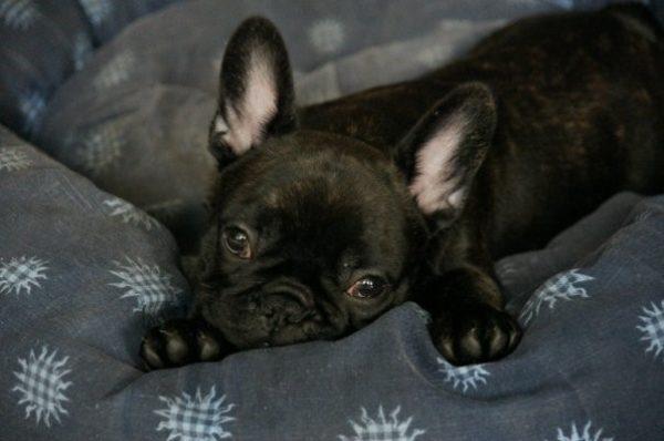 Покажите щенку место для сна, миски с водой и едой
