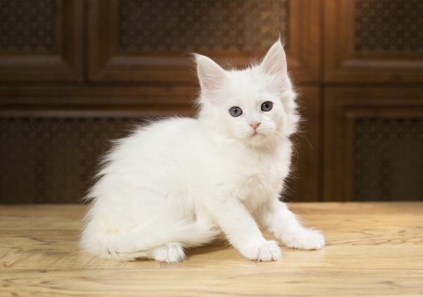 Белый цвет считается символом чистоты и невинности