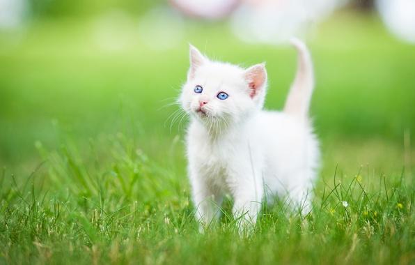 Как назвать белого котенка мальчика